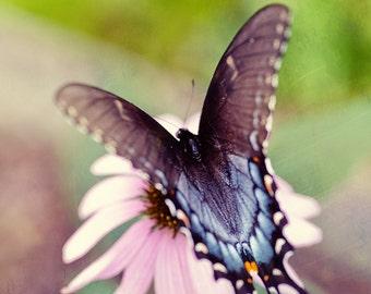 butterfly photography, blue decor, pink wall art, nature photography, nursery art, butterfly wings , Eastern Black Swallowtail IV