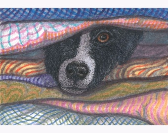 Border Collie in the Airing Cupboard 8x10 art print