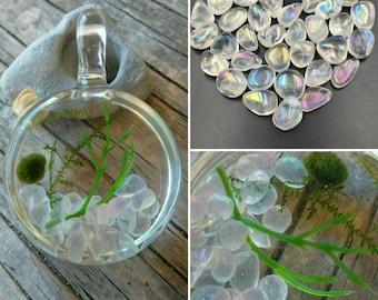 Marimo and Java Moss Locket - Live Plant Jewelry - Angel Aura Quartz
