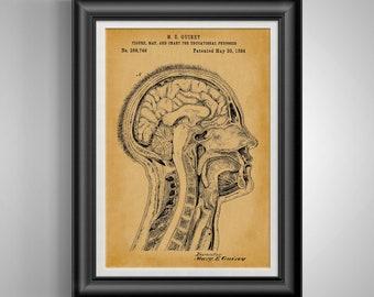 Medical Student Gift for Her * Anatomy Gift for Doctor * Anatomical Medical Art * Skull Decor * Nursing Student Nurse Gift for Wife PP 9067