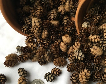 100 + hemlock small PINECONES from Vermont. Great for wedding table decor, fairy gardens,crafts and more