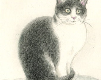 Cat original drawing - P001January2016