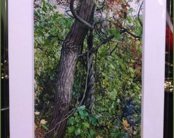 Twisted Trees Photograph (2004)