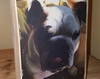 Pet photo image on wood