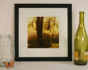 Framed Square Photograph - Southern Oak Silhouette