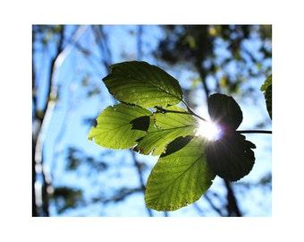Zen Art, Large Art Prints, Spiritual Art, Large Forest Photography, Leaves, Sunshine, Large Tree Art, Zen Decor, Peaceful Art, Relaxing Art
