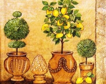 TOWEL in paper Pot lemon and other boxwood #AL044