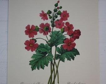 Vintage Floral Botanical.  ON SALE.