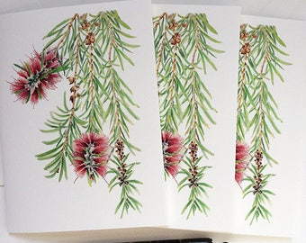 Botanical greeting cards with envelopes - set of 3 bottlebrush print cards & 3 envelopes - blank inside cards - Callistemon tree branch