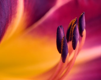 Macro photography, flower stamens colorful wall art, flower artwork floral print, yellow burgundy modern decor abstract art, orange purple