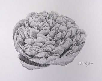 "Stippling Peony ink on paper 8 1/2"" x 5 1/2"""