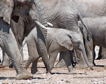 Big Family for Baby Elephant - photo print, fine art wildlife photography, baby animal, African art, safari nursery decor, nature decor