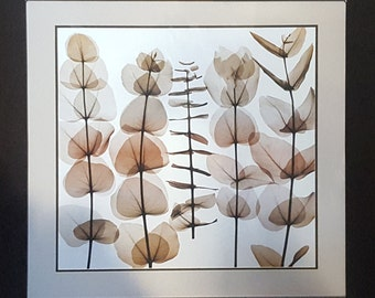Classic Art Print Reproduction of Flora by Steven N. Myers 32X32, X-Ray Photography