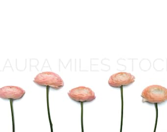 Styled Stock Photo / Flower Stock Photo / Floral Styled Photo / Ranunculus Stock Photo / Valentine's Day Stock Photo / Digital Background