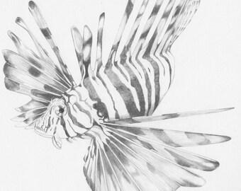 Lion Fish_- Original Pencil Drawing, wildlife art