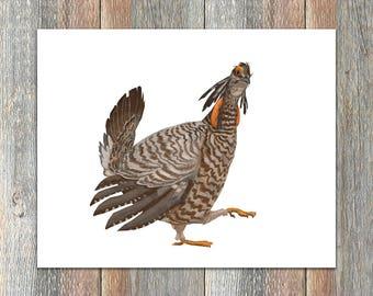 Greater Prairie Chicken Bird Print