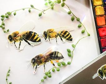 Bee Sticker Set, Vinyl Sticker Set, Laptop Stickers, Laptop Sticker Set, Honeybees, Save The Bees, Artwork Stickers, Bee Art