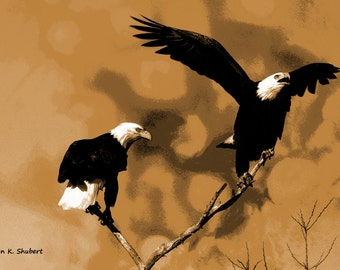 Bald Eagle Art, Southwestern Bird Totem Animal, Wildlife Woodland Wilderness, Sepia Brown Black, Home Decor, Wall Hanging, Giclee Print