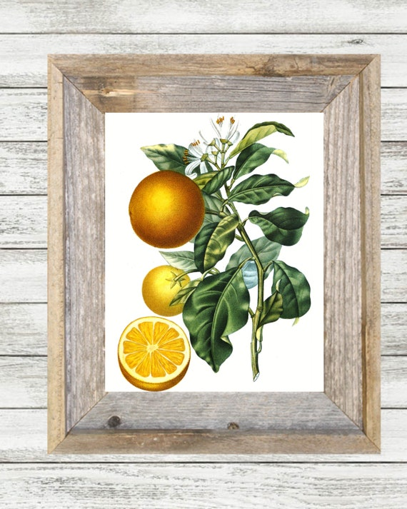 Vintage Orange Botanical Printable