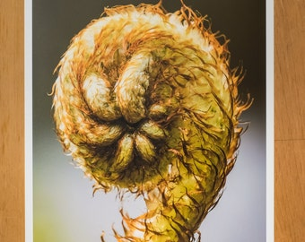 Photo Print of Fiddle Head Fern from DebSladekPhotography