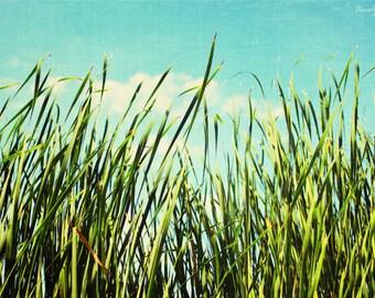 blue, green,  fine art photography, summer, grass and sky