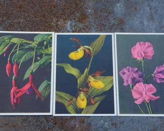 Vintage Flower Postcards, Set of 3 Floral Cards, Sweet Peas, Fuchsia, Orchid Postcard, Vintage Cards for Scrapbooking and Wedding Crafts