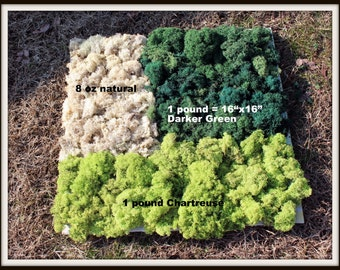 Bulk Reindeer Moss 1 pound bag Preserved in 3 Beautiful Colors-Natural-Chartreuse Green-Basil dark Green-Sold in a 9x12 gal...