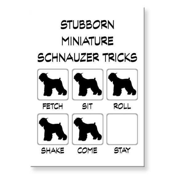 Miniature Schnauzer Stubborn Tricks Fridge Magnet