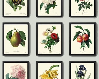Botanical PRINT SET of 9 Art Redoute 124 Beautiful Fruit Flowers Pear Hydragea Peach Banana Plants Home Room Wall Antique Interior Design
