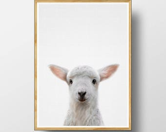 Lamb Print,  Baby Sheep Print,  Nursery Animal Print, Nursery Animals, Nursery Printable, Cute Baby Lamb, Farm Animal, Baby Animal Prints