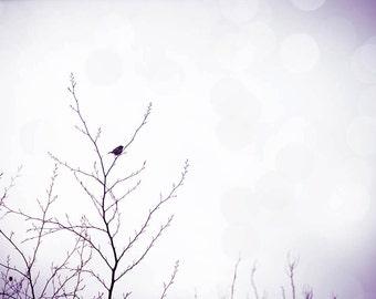 birds photography winter bird in a tree birds wall art 8x10 24x36 fine art photography nature bokeh photography winter bird decor lilac gray