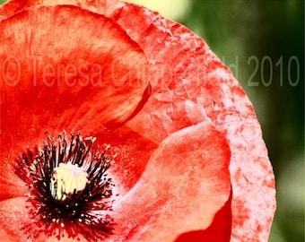 Flower Photography, Red Poppy Print, Portland Oregon, Fine Art Floral Photo, Kitchen Garden Wall Art, Bright Home Decor, 8x10, 11x14, 16x20
