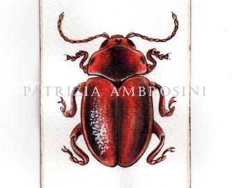 Original ACEO ..Entomoscelis adonidis..Original  watercolor Card painting  Insecta Coleoptera
