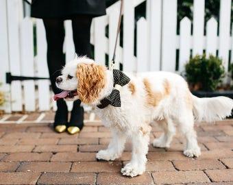 Black and Gold Polka Dot Bow Tie Dog Collar, Bowtie Dog Collar, Preppy Dog Collar, Holiday, New Year's Eve, Christmas