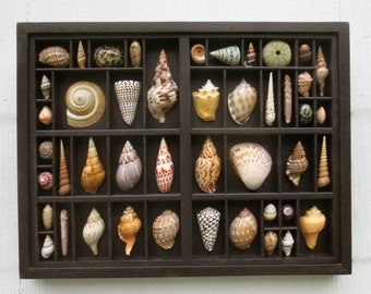 Sea shell art, seashell assemblage, mixed media collage, wall art, seashell display within a recycled printer's type box
