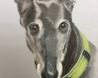 Greyhound commission pet portrait