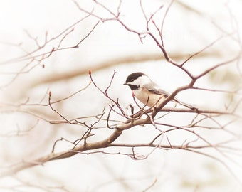 Nature Photography - Chickadee Photograph - Bird Wall Art Print - beige, soft gray, brown - rustic home decor - nursery art - Landscape