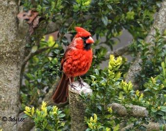 Cardinal, Red Bird, Cardinal Photograph, Nature Photography, Wildlife Photography, Wall Art, Home Decor, Bird Photography, Bird Lover