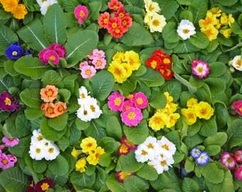 Columbia Road Flower Market Print - London Photography - Flower Photograph
