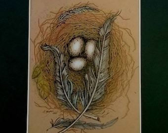 Feathers,art,print,nest,Ink, color pencil,egg, eggs, wildlife,bird,brown,nature