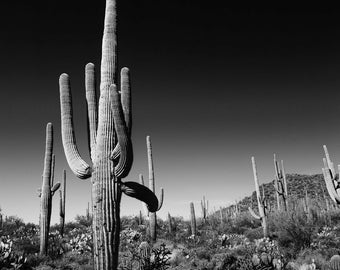 Arizona Landscape, Black and White, Highland Desert, Sand, Cactus, Saguaro, Clouds, Wall Art, Home Decor