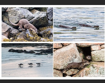 Set of 4 Greetings Cards - Otter Design Blank Inside Wildlife Photo Card - Photography