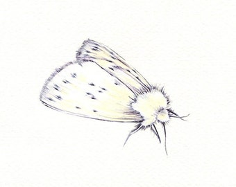 """White Moth art print of an original drawing available 5x7"""" or 8x10"""""""