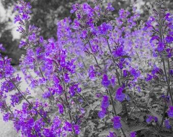 Purple Flowers Photograph on Canvas