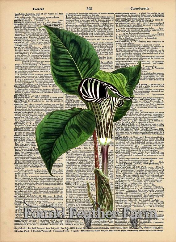 """Vintage Antique Dictionary Page with Antique Print """"Zebra Pitcher Plant"""""""