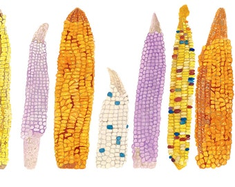 """Native American Inspired Art, Fine Art Watercolor Print, Giclee Archival Print, Southwest Painting,Corn, Heirloom Corn """"The Council"""""""