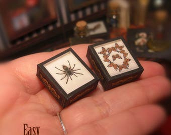 Miniature SHADOW BOX Set . Tarantula and Monarch butterfly . Dollhouse Miniature . Shadow box . DOWNLOAD . Taxidermy. Scale 1:12
