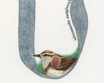 Avian Alphabet U