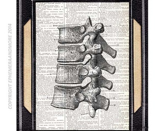 SPINAL COLUMN art print thoracic vertebrae bones human anatomy medical science chiropractor black white vintage dictionary book page 8x10