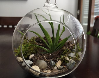 Air plant Terrarium Kit with Glass Holder